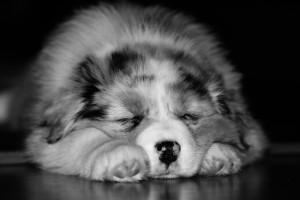 dog-1127486_960_720