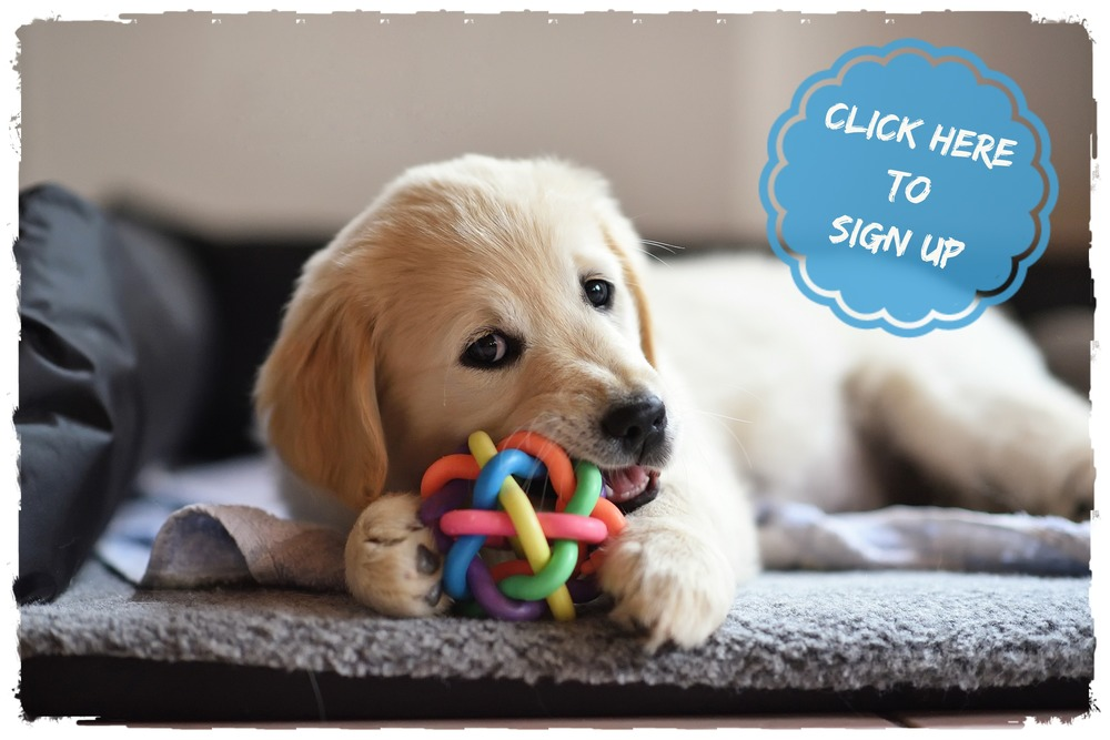Puppy class in The Hague - OhMyDog! Dog Training The